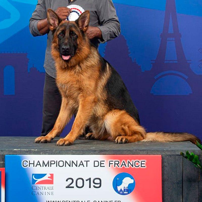 Pirlo de Bureba, campeón francia 2019